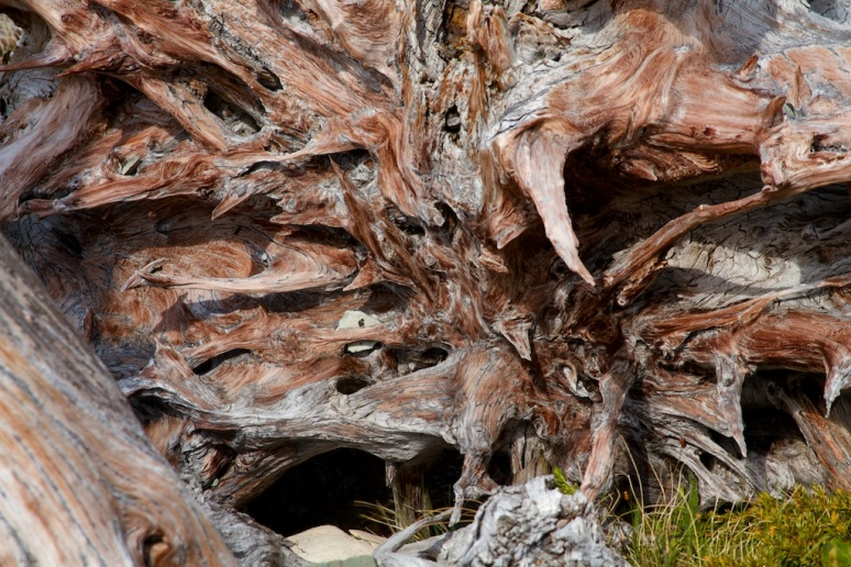 A Tree-Skeleton Forest